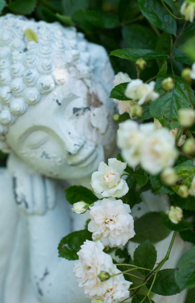 Bilder Meditation Buddha