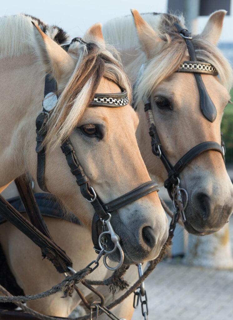 Pferde lebendig